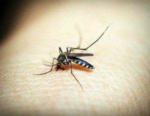 Mosquito possibly causing malaria